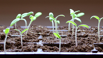 Picture of seedlings